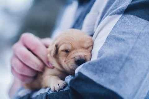puppy slapend op arm