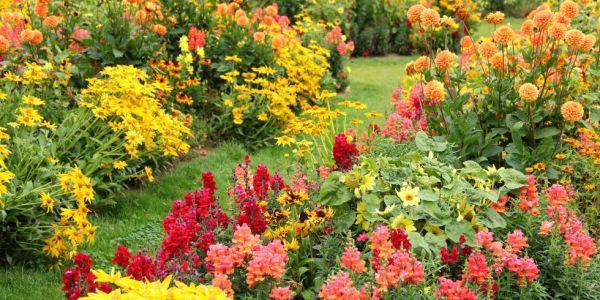 hooray fall flowers lovin'