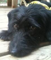 lovin life pet rescue adoption