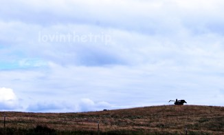old tractor on the hill