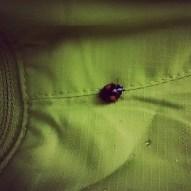 Jason's pet ladybug