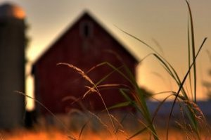 farm-prairie-grass_21081132-300x199