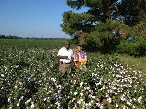 CottonFieldsBaconsCastle