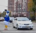duck in crosswalk