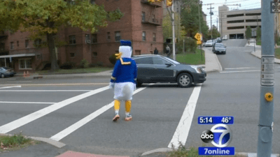 huge duck