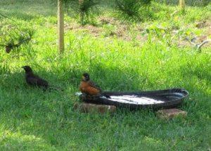 Sapia - 6.26.16 birdbath