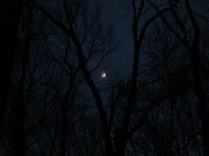 Sapia - crescent moon over Manalapan Brook