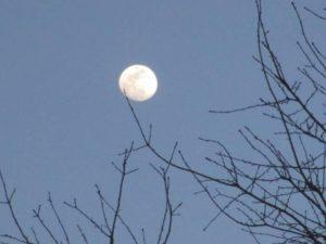 4.18.17 - Sapia - near full moon over Manalapan Brook in Monroe