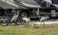 Meeting some real snowbirds- Sebring, FL   The Lowe's RV ...