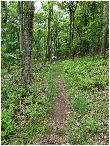 Black Ridge Trail, Blue Ridge Mountain