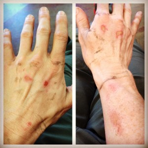 Indian Creek Gobie Hands