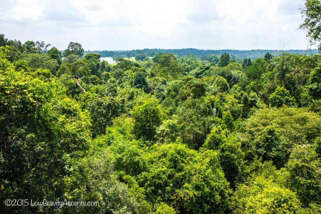 Singapore Treetop Walk canopy