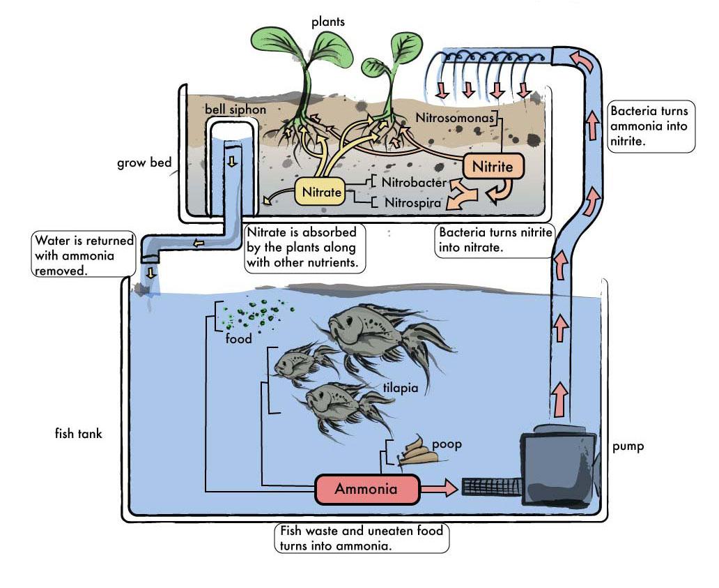 why aquaponics lowlands community