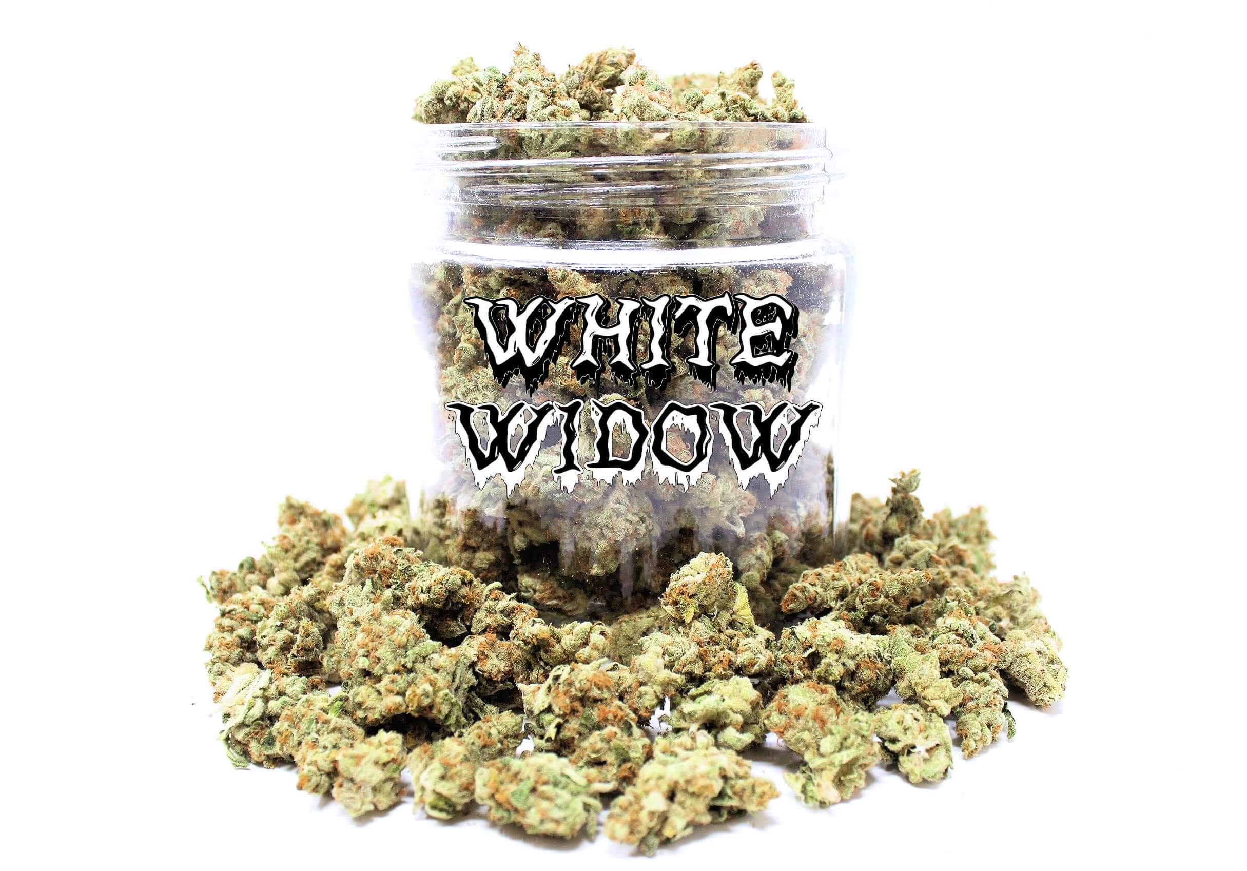 Buy White Widow Strain (AAA) Online – Low Price Bud