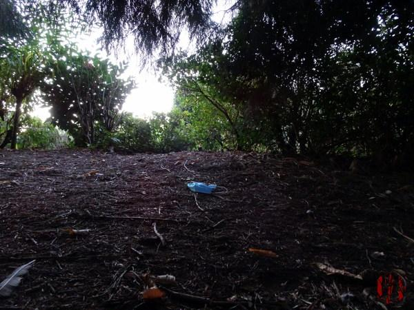 A view of through the undergrowth of Horsham Park seen over a discarded face mask in the time of Coronavirus Covid-19.