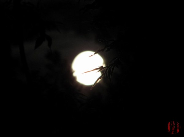 Bright full moon slightly blurred with a few near branches in front of it in much sharper focus
