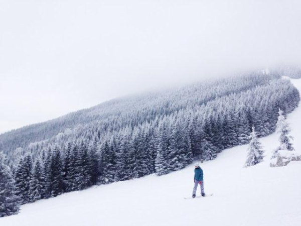 A snowboarder in the way of trees and mountains.