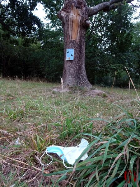 A discarded mask in the undergrowth of Horsham Park during the time of the Covid 19 pandemic.