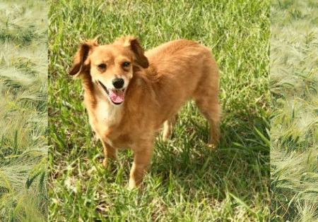 Bella Girl Adoptable Dog