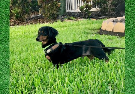 Adoptable Dog Onyx