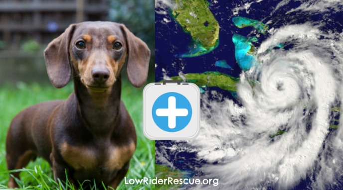 Hurricane Preparedness for your Dog