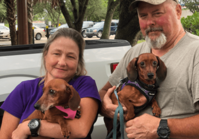 Fosters with Mickey and Minnie Adoptable Dachshund Pair