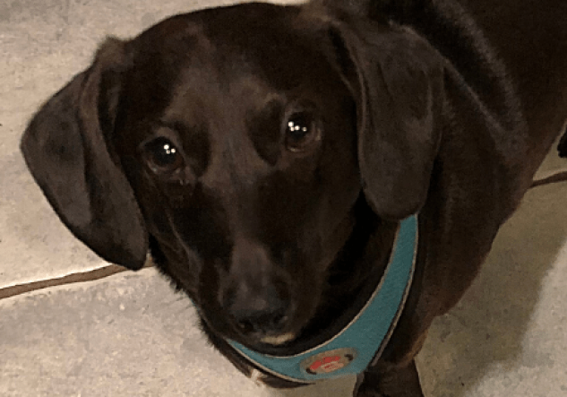 Adoptable Dog Murphy
