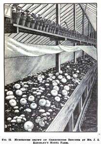 mushroomgreenhouse