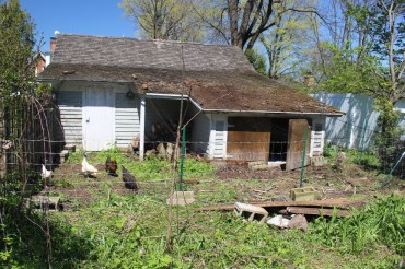 Exterior of shed with chickens.
