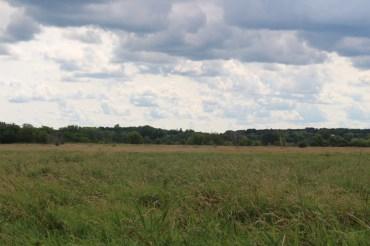 High-grass prarie.