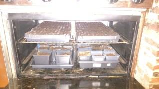 The oven pilot light creates a perfect spouting box.