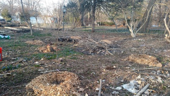 Planted apple, peach, and plum trees.