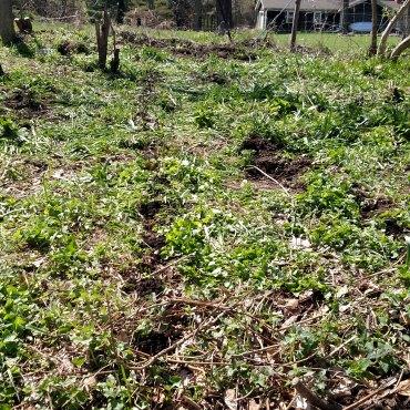 Potato field before.