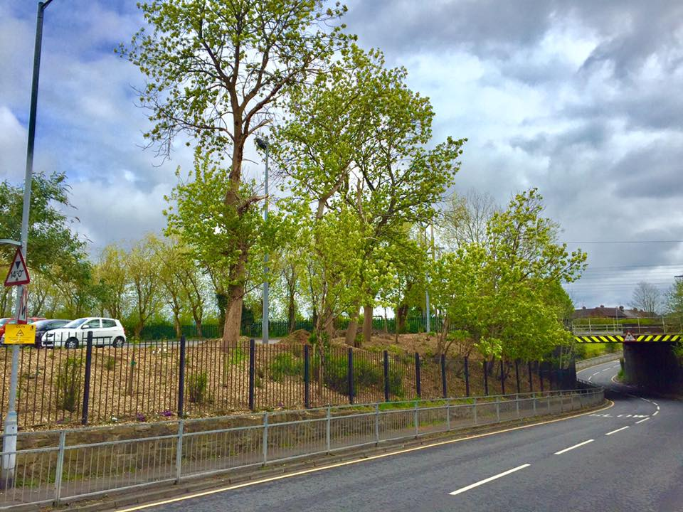 The new improved look of the roadside next to Golborne Library, thanks to Golborne in Bloom