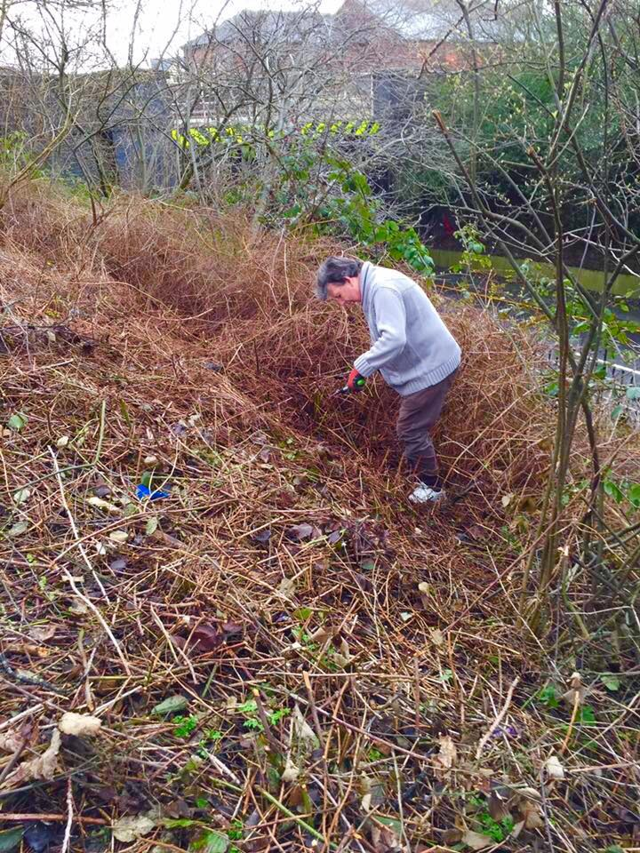 A Golborne in Bloom volunteer works to clear the embankment between Golborne library and the road