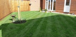 Neatly mown lawn with stripes