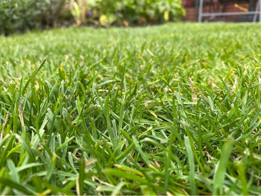 A green grass lawn