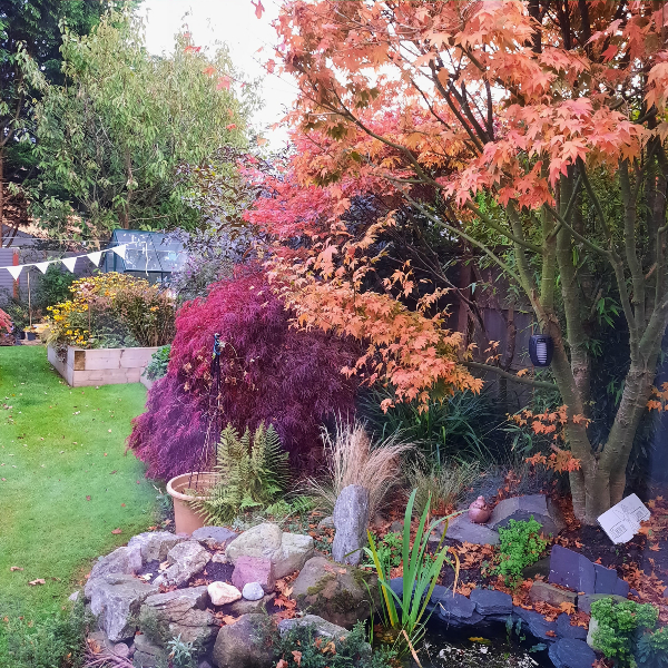 Michelle Amberry's photo of her Lowton back garden in autumn 2020