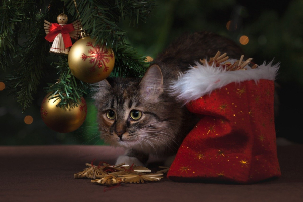 Cat hiding under the Christmas tree