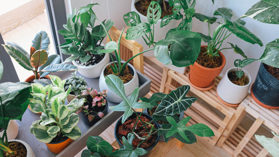 Houseplants all grouped by the window