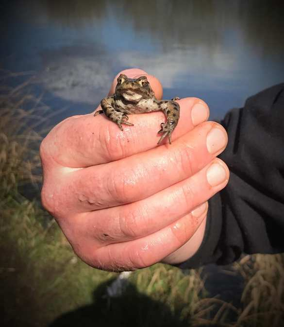 Julie Smith photographed this teeny little frog on a walk in Viridor Woods