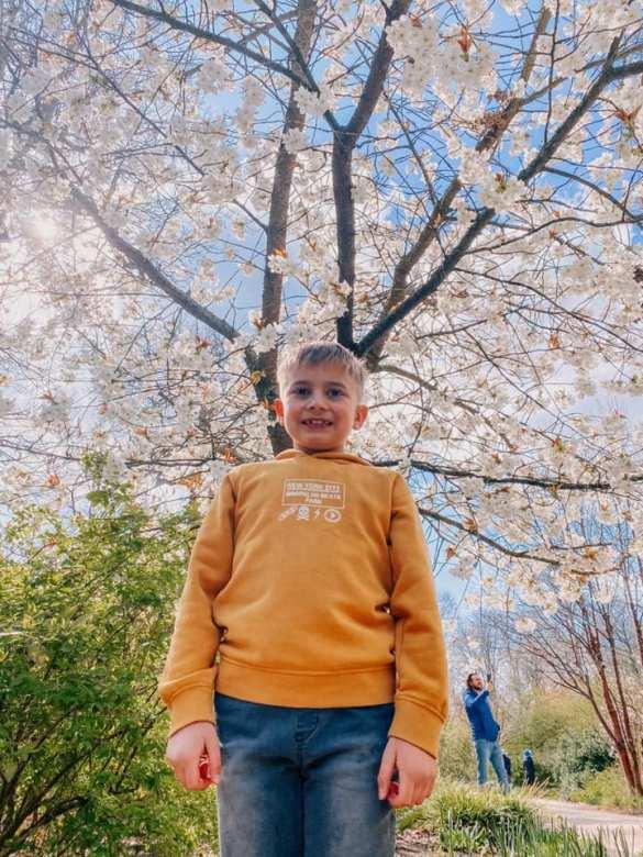 Boy stands under blossom tree