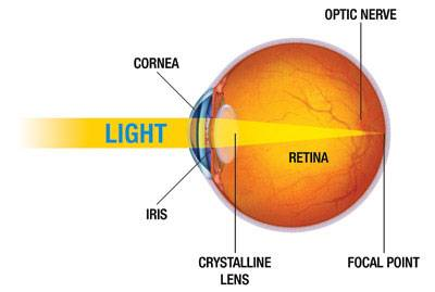 Diagram of the eye showing light entering