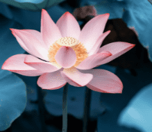 Crystal clear image of flower blossom