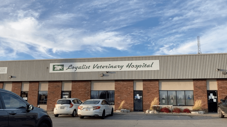 Learn about our clinic at 360 Bell Blvd in Belleville