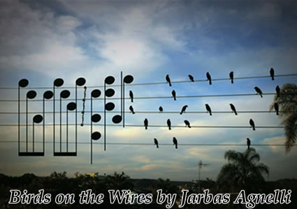 birds on the wires by jarbas agnelli Paulo Pinto photo raven
