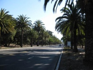 Stanford University Palm Avenue