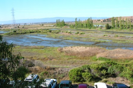 W Silicon Valley Newark - wetlands view 2009
