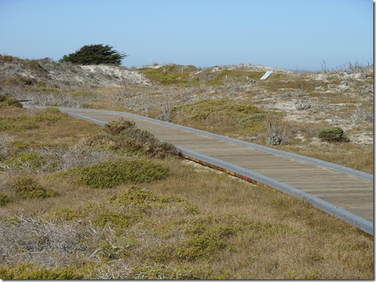 Asilomar-Spanish Bay 072