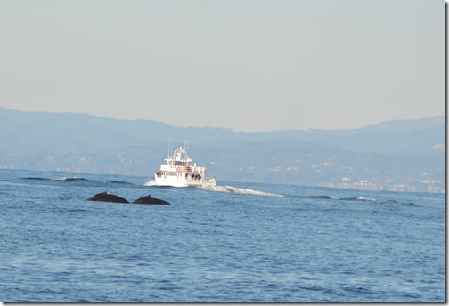 Whale 2 humpbacks